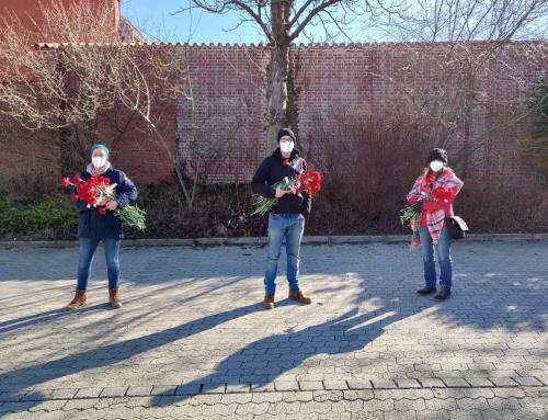 Rote Nelken am 08. März – Weltfrauentag/Frauenkampftag